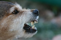 Why Are Some Pets More Aggressive Than Others?