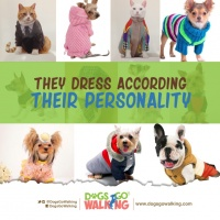 Pets Dress for the occasion